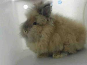 Adopt MR. KIBBLE a Bunny Rabbit
