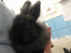 Adopt LEFT TWIX a Bunny Rabbit