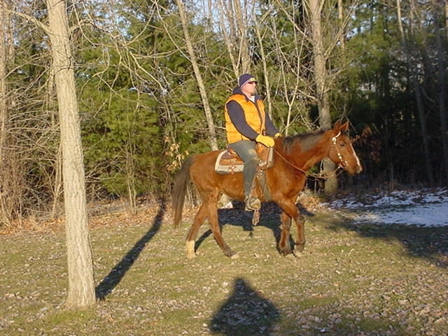 Beginner Friendly, QUIET, Gentle, Rides and Drives, Trail, Trail horse, 4-H