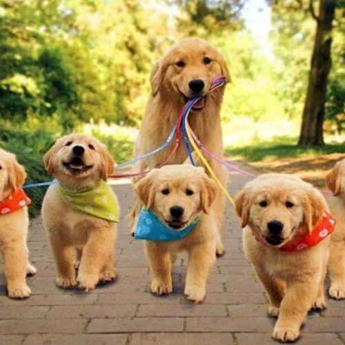 Quality pet services