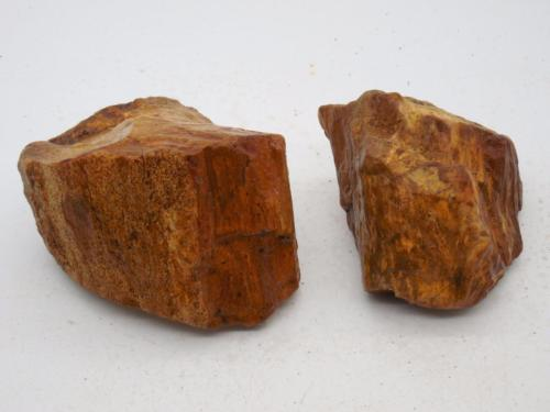 2 Petrified Wood  Rocks Rough R43 Lapidary Rock Fossil Oregon Slabs Cabbing