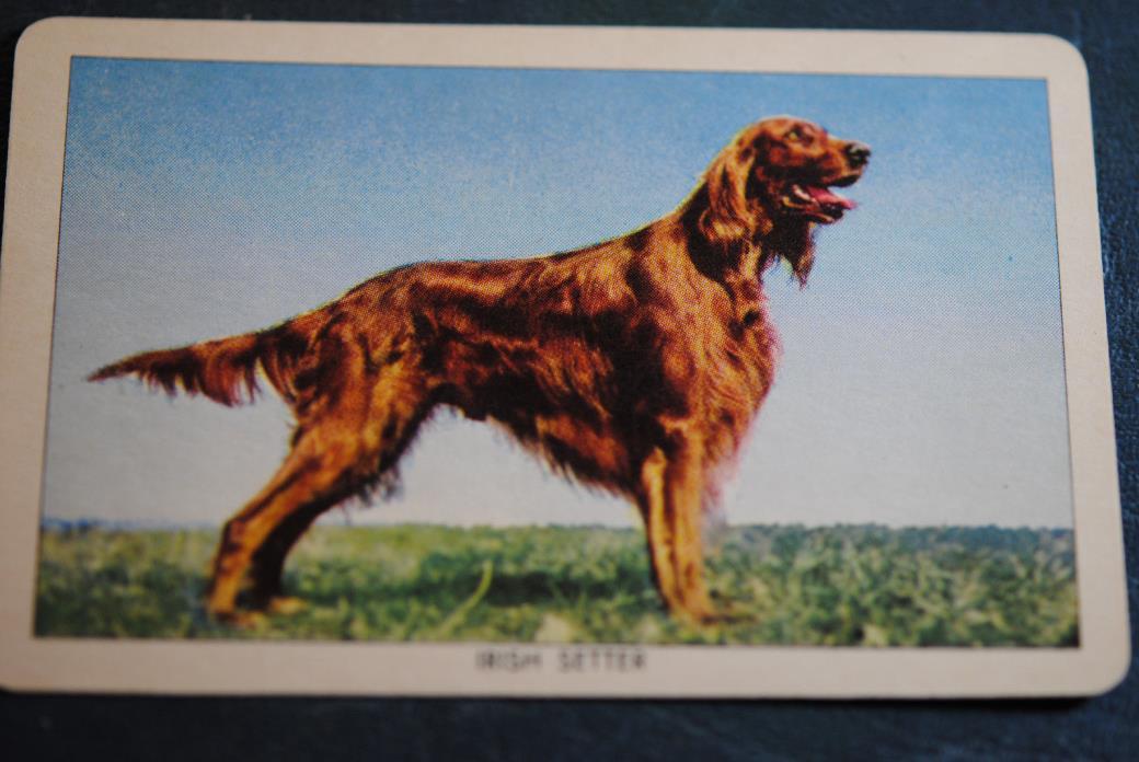 VINTAGE ORANGE CRUSH 1950 DOG TRADING CARDS, OVER 350 MANY MINT!!!! COCA COLA