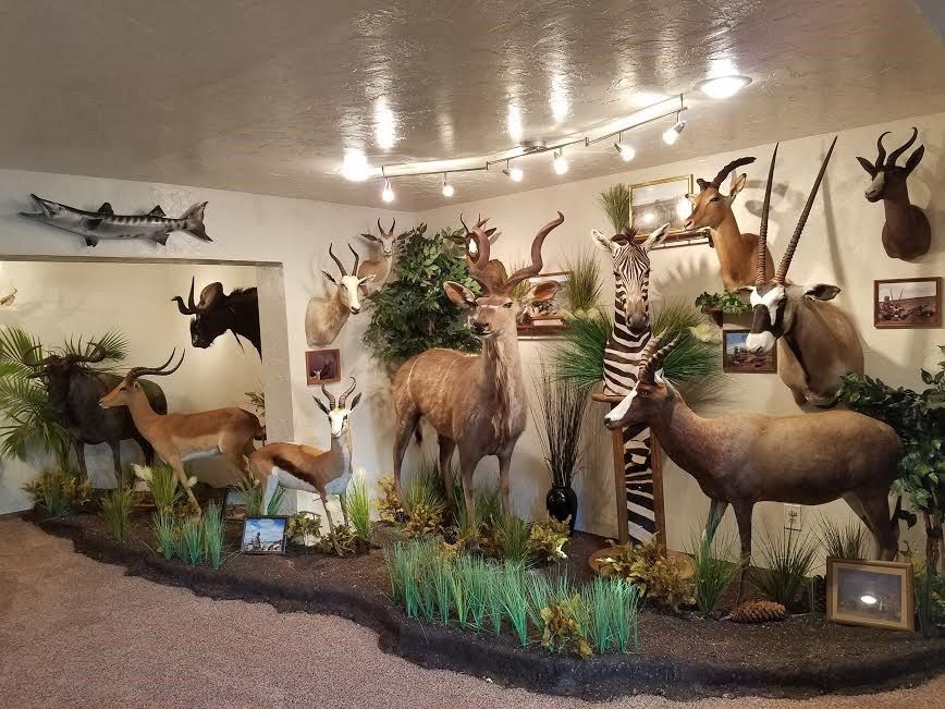 African Taxidermy Collection