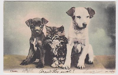vintage 1906 Chums Kittens and Puppies  Dog Cat postcard