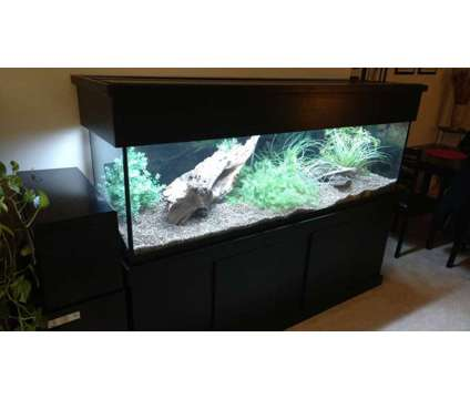 125 Gallon Aquarium Fish Tank