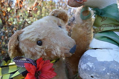 HUGE 20 inch ANTIQUE German teddy bear Sweet old fellow Strunz or Steiff