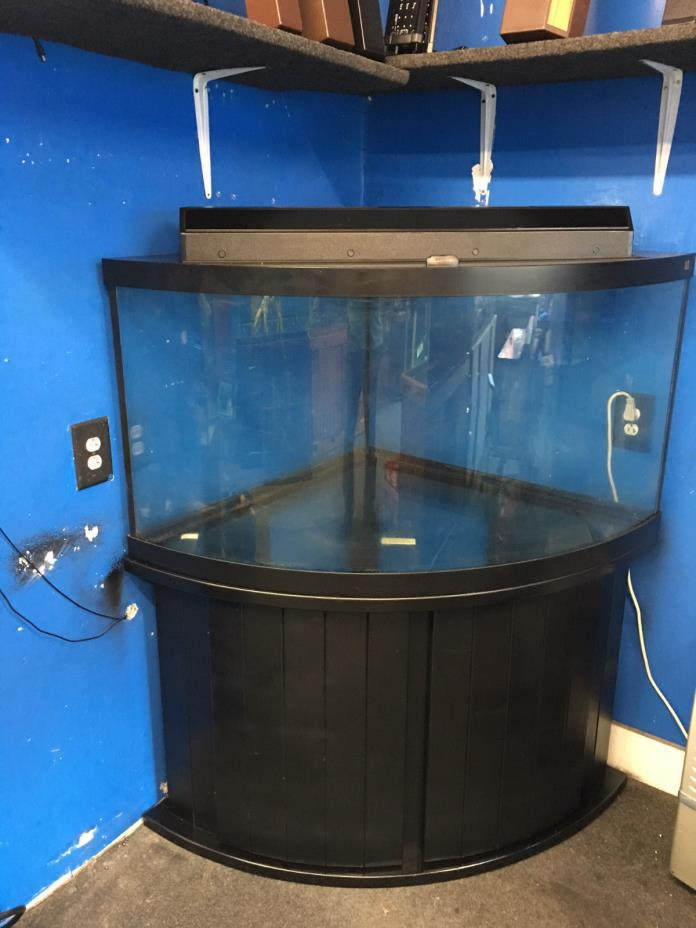 Corner fish tank for sale classifieds for Corner fish tank for sale