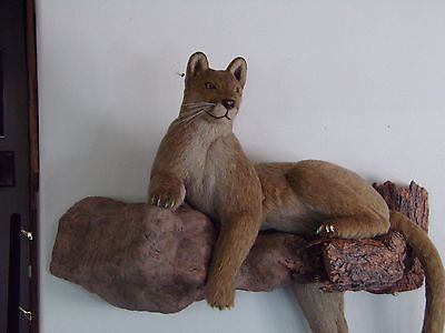 Hand crafted Life Size Mountain Lion Replica 100% Synthetic