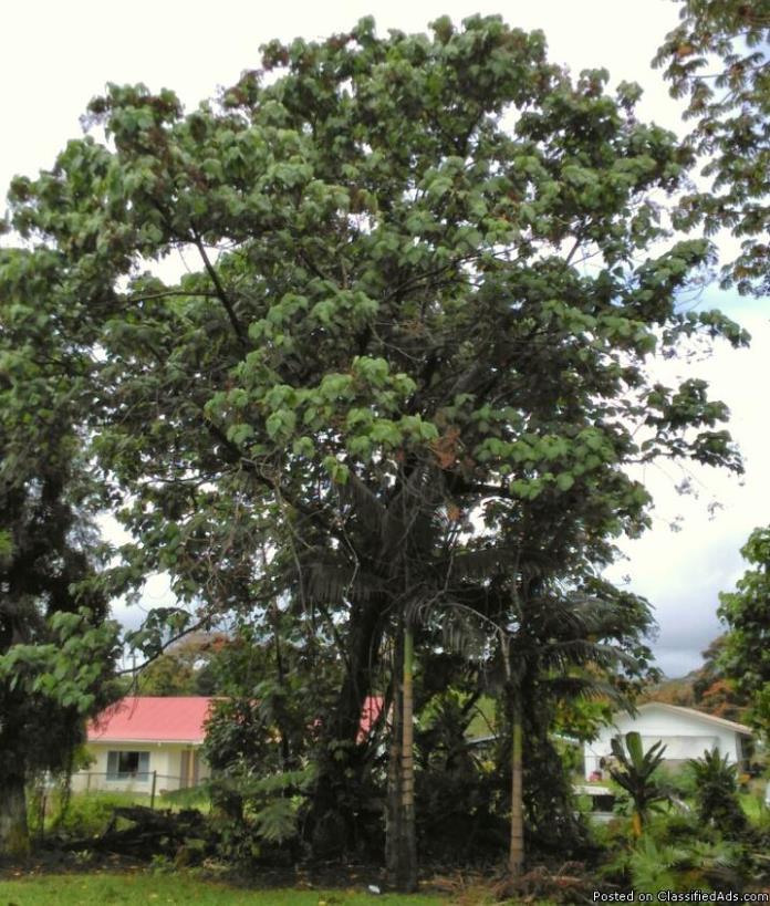 Tree Removal Hawaii