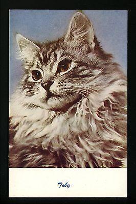 Cat Postcard Kitten Toby cat photo Standard Arts C3
