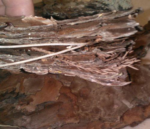 Fat lighter Fat Wood pine bark kindling fire starter wood