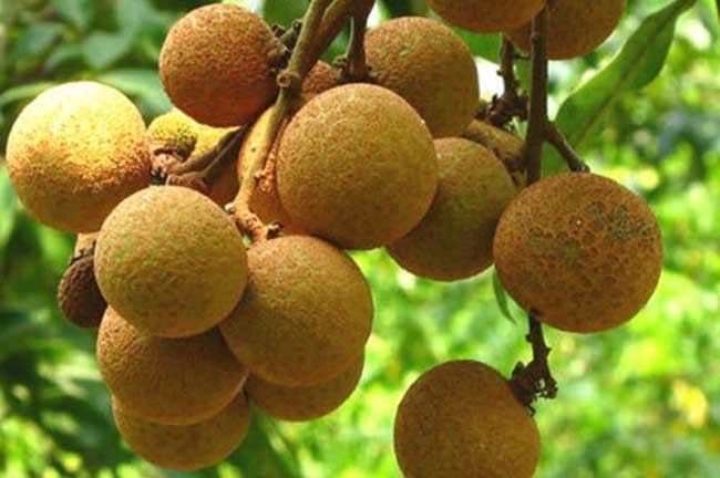 Fruit trees for sale classifieds for Fruit trees for sale