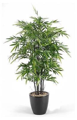 6 ft. Bamboo Tree in Round Glossy Black Planter [ID 3479999]