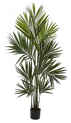 Kentia Palm Silk Tree [ID 3376974]