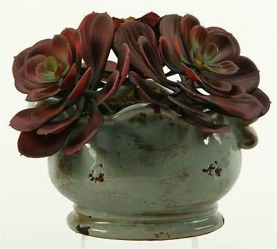 Red and Brown Echeveria in Ceramic Planter [ID 3479969]