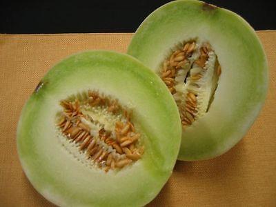 15 Honeydew Melon Seeds