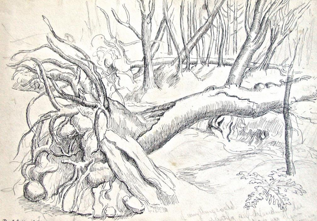 Dorothy Eaton Drawing (III)  Wooded Landscape