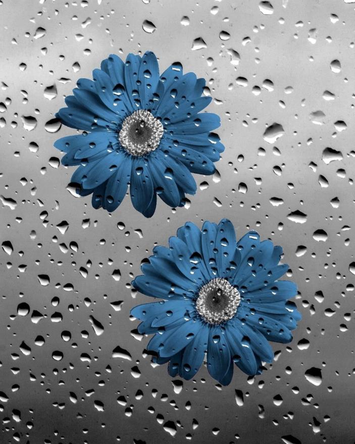 Bathroom Wall Pictures, Blue Gray Daisy Flowers Raindrops, Blue Gray Wall Decor