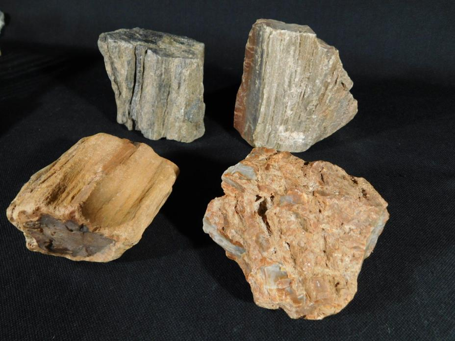 A BIG Lot of 225 Million Year Old Petrified Wood Fossils From Arizona 1900gr e