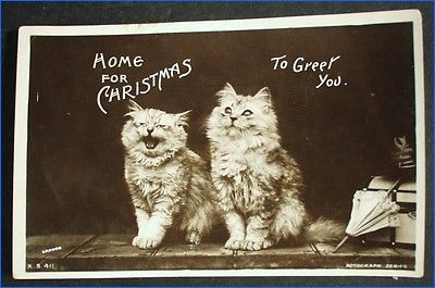 VINTAGE REAL PHOTO POSTCARD 2 CATS KITTENS