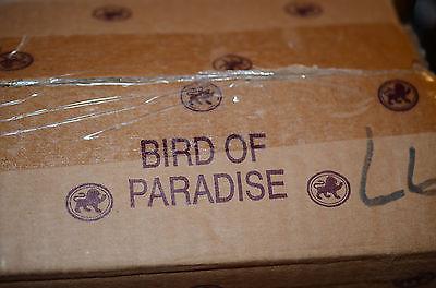 Gene Doll Bird of Paradise. Signed COA.  In box
