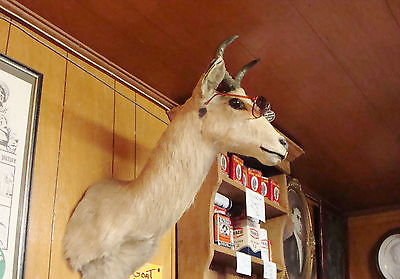 MOUNTED ANTELOPE HEAD TAXIDERMY MAN CAVE