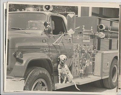 8X10 Photos Lake Arrowhead Volunteer Fire Station Horry CO MB SC Dalmation Truck