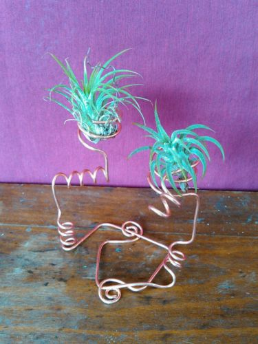 SET of 2~Health AZTEC RED Air Plant with Handcrafted Copper Plant stand