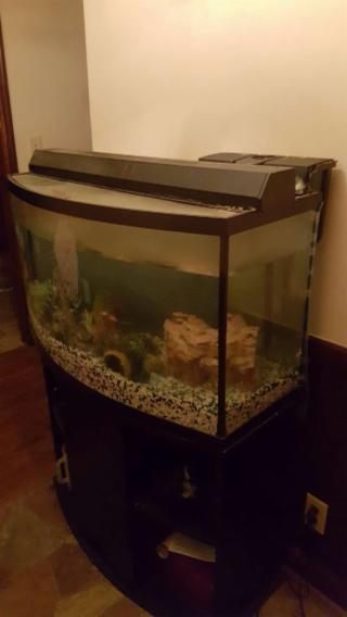 50gal fish tank
