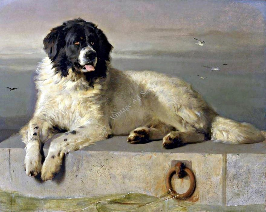 Landseer Newfoundland Dog Painting.. Fine Art Canvas Print. Size 11x14