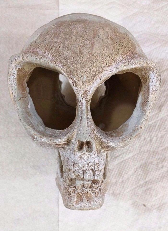 Aquarium decorations skulls for sale classifieds for Fish tank skull decoration
