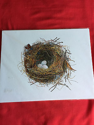 PRINT OF GRAY JAY NEST. SIGNED AND NUMBERED BY MELINDA PAHL 62/100