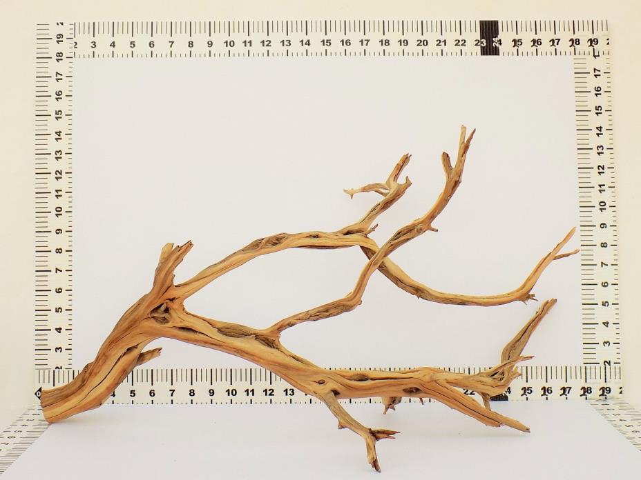 Aquarium Driftwood Branch Aquarium / Reptile Decor from Manzanita Direct 0429-11