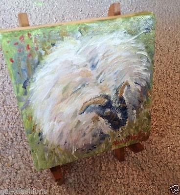 Black Face Scottish Sheep 5