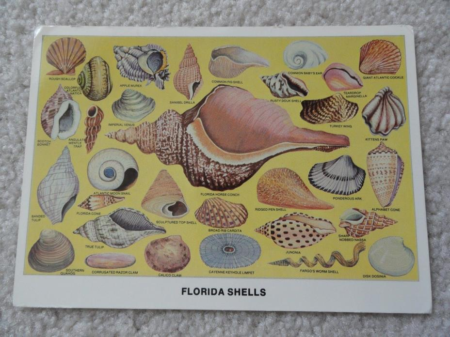 Florida Shells   Postcard