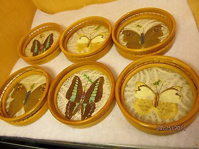 Vtg Real Pressed Butterflies Coasters Set of Six Bamboo retro 1970