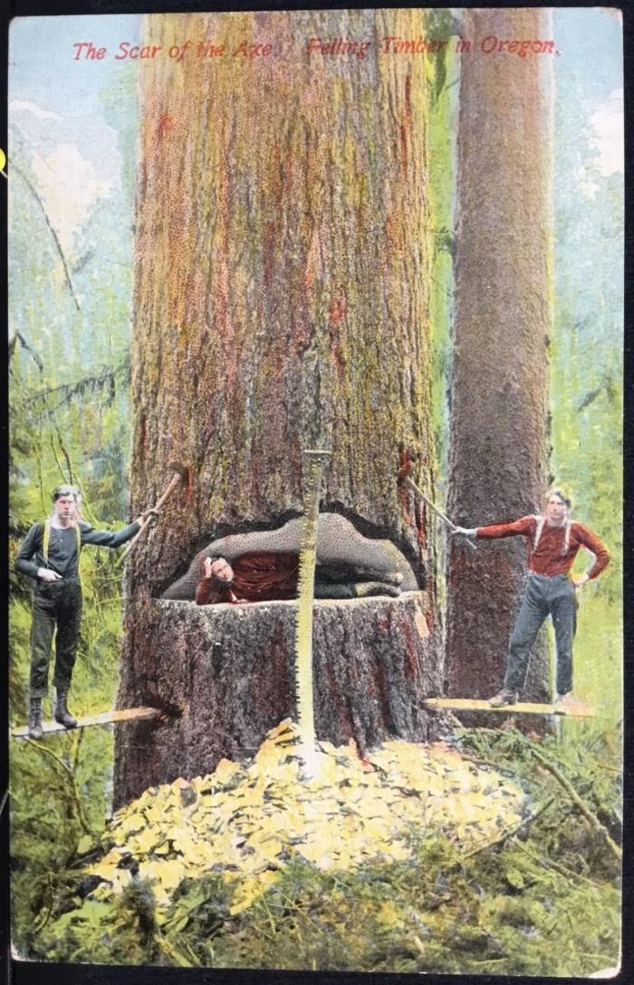 IN THE TIMBER BELT Oregon - c1910 POSTCARD Lumberjacks