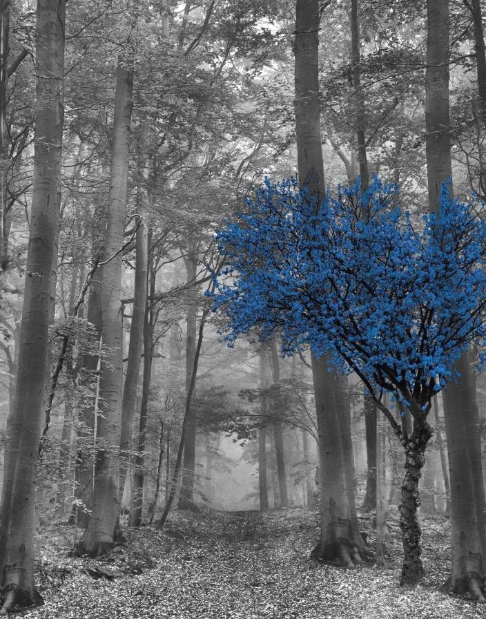 Black White Blue Wall Decor, Tree Forest, Blue Gray Modern Home Wall Picure