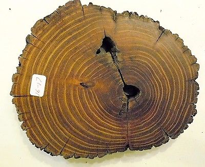 Osage Orange, Art & Craft, Plaque, Wood Working & Carving, Mounting. (16-17)
