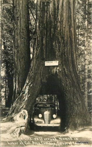 1940s Redwood Highway Drive Through Coolidge Tree California RPPC Patterson 3716