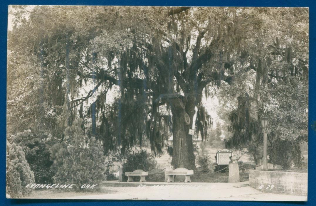 St Martinsville Louisiana Evangeline Oak Spanish Moss Real Photo Postcard RPPC