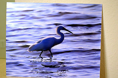 8x10 Metallic Printed Photograph Of A Snowy Egret Bird, Picture Art Heron