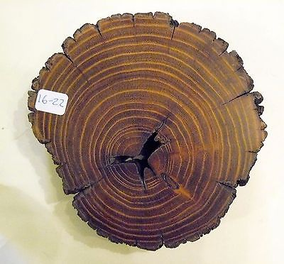 Osage Orange, Art & Craft, Plaque, Wood Working & Carving, Taxidermist  (16-22)