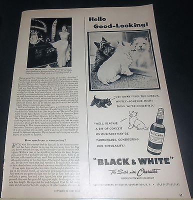 1949 SCOTTY & WESTIE BLACK & WHITE SCOTCH ADVERT ~ HELLO GOOD-LOOKING! ~ MIRROR