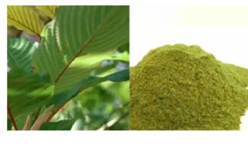 60 Capsules Fresh Premium Green Malay fresh from Indonesia