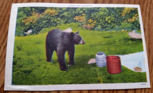 Vintage Postcard Lunch Time in Maine 1955