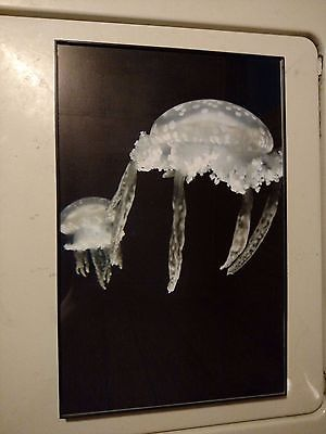 Jellyfish framed photograph