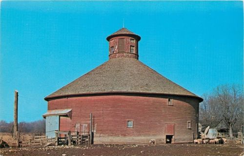 Lodi  Indiana~ Pigs Feed on Hog Trough~Round Red Barn~1960s Postcard