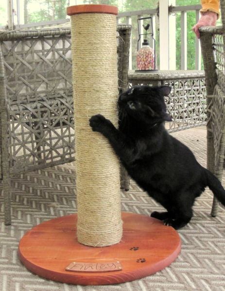 Custom made cat scratching post with your cat's name