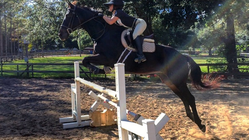 Flashy Ottb for sale Loving Home Required
